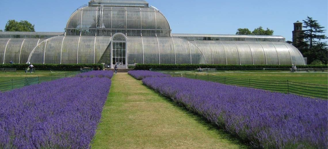 Royal Botanic Gardens Kew, Palm House